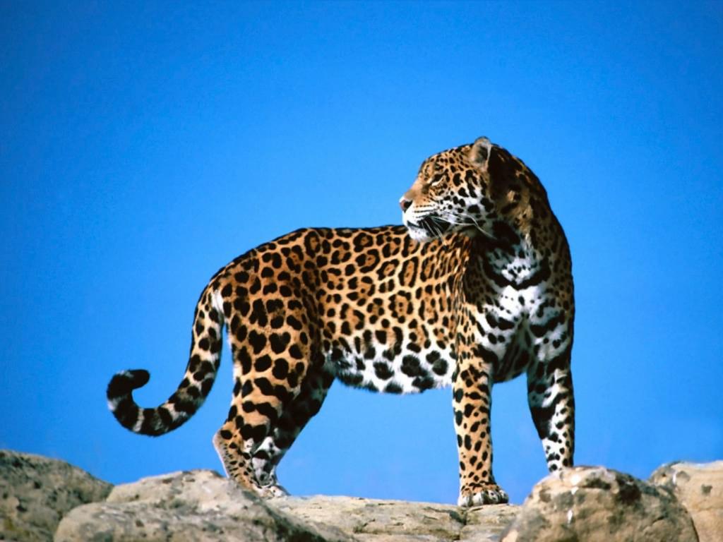 Raccolta di sfondi desktop animali sfondi animali pc for Sfondi desktop animali