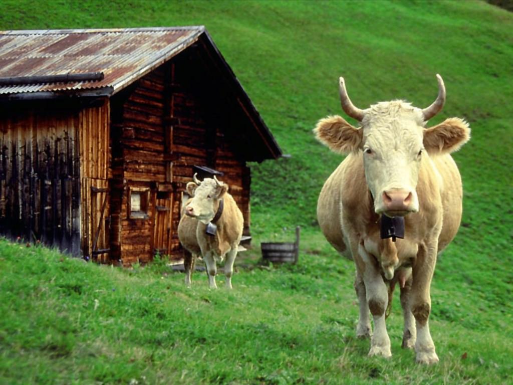 Raccolta di sfondi desktop animali sfondi animali pc for Animali desktop